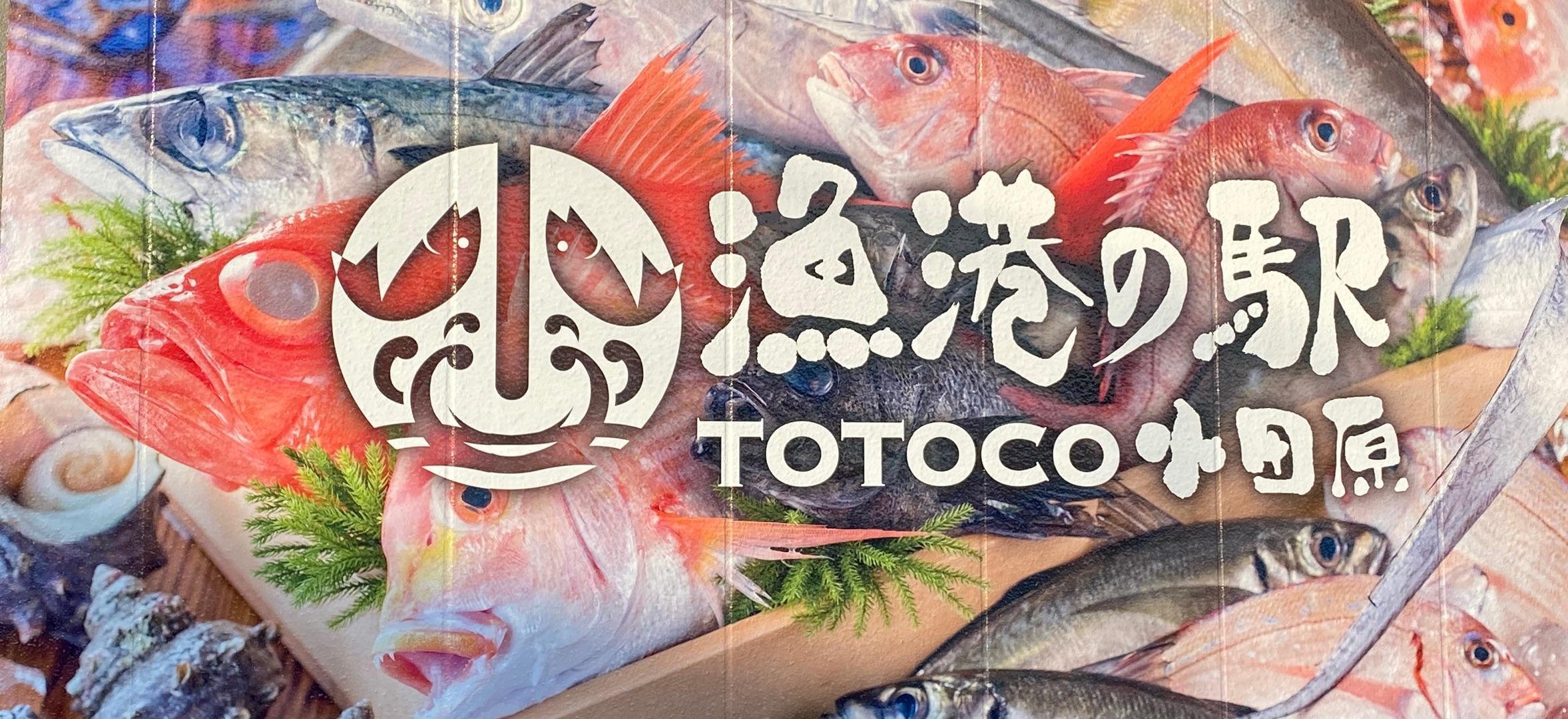 小田原 駅 漁港 の totoco